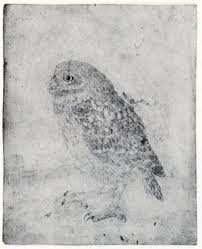 Jan Mankes  Burrowing Owl